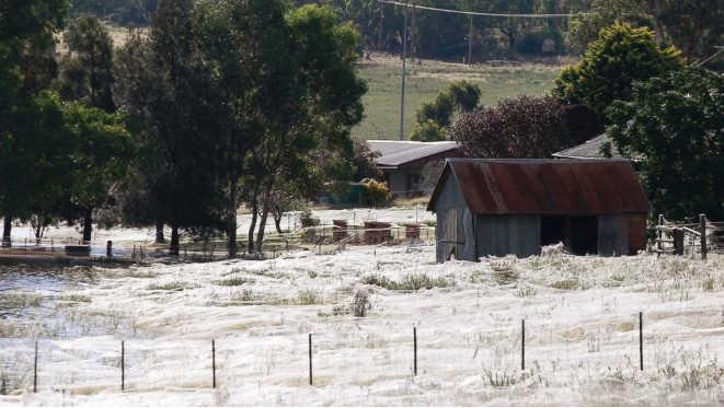 in-australia-piovono-ragni