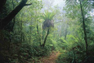 Foresta Pluviale Australiana
