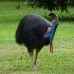 animali-australiani-pericolosi-13