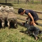 farm-australia-1