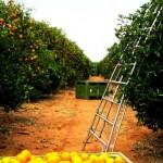 farm-australia-11