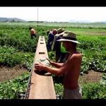 farm-australia-12