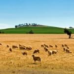 farm-australia-17