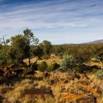 outback-new-south-wales