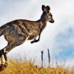 cose-sapere-australia