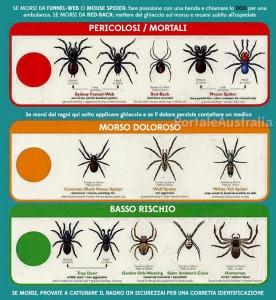 ragni-mortali-australia