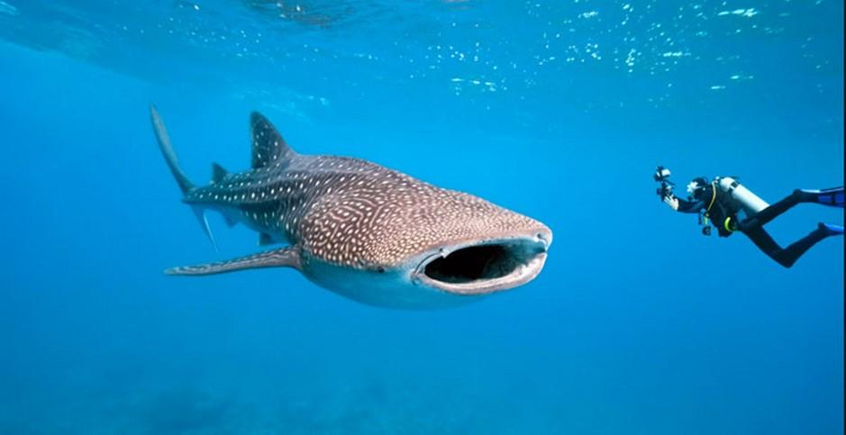 nuotare-con-gli-squali