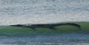 Sicurezza sulle spiagge Australiane