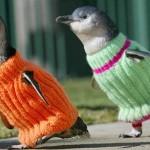 pinguini-maglioncini-8