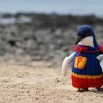 pinguini-maglioncini-9