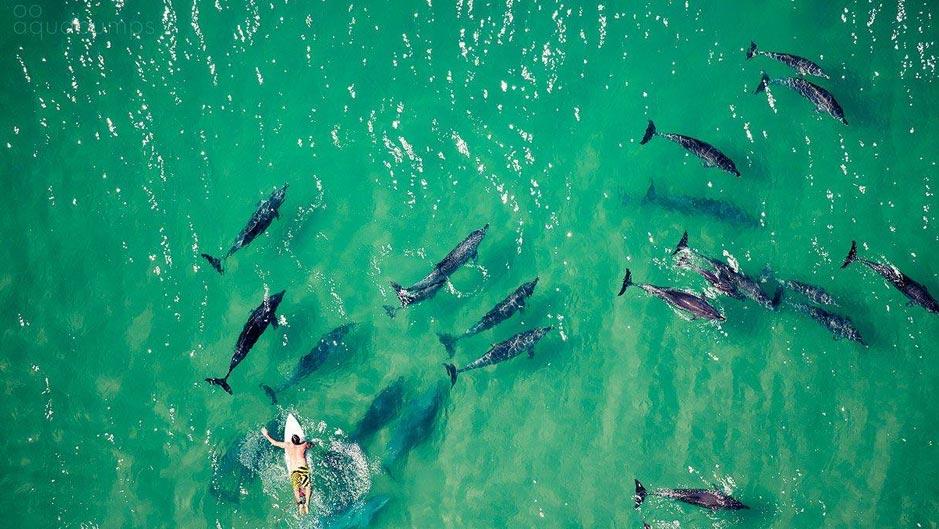 delfini-australia