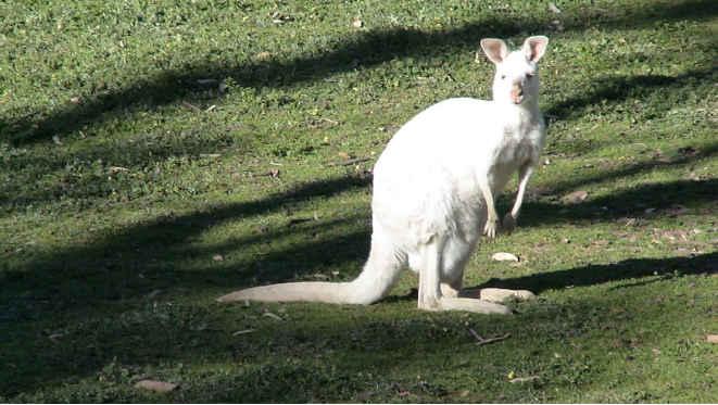 natale-in-australia