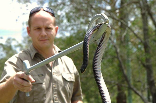 cacciatore serpenti Brisbane