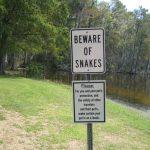 attenzione-serpenti-australia