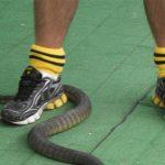 serpenti-australia-pericolosi