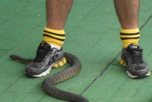 7 cose che non sapevi sui serpenti australiani
