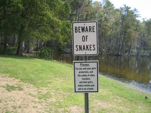 attenzione serpenti australia